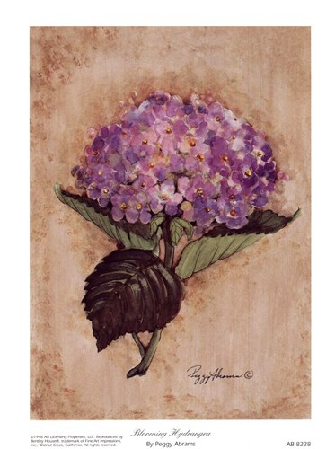 Blooming Hydrangea art print by Peggy Abrams for $10.00 CAD