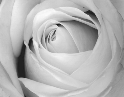 Rose art print by Art Photo Pro for $10.00 CAD