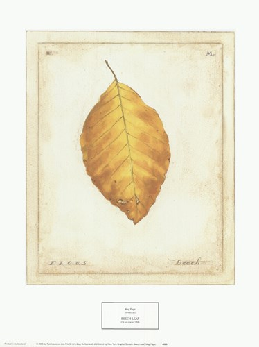 Beech Leaf art print by Meg Page for $25.00 CAD
