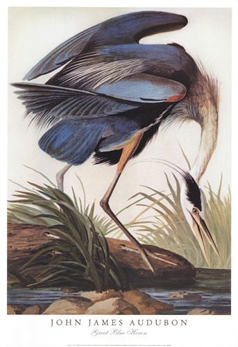 Great Blue Heron art print by Unknown for $40.00 CAD