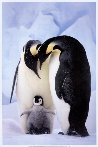Penguin Family Portrait art print by Tim Davis for $43.75 CAD