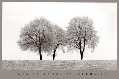 Three Trees art print by Unknown for $40.00 CAD