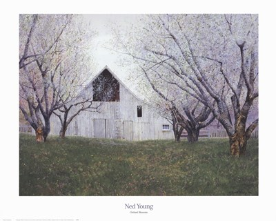Orchard Blossoms art print by Ned Young for $40.00 CAD