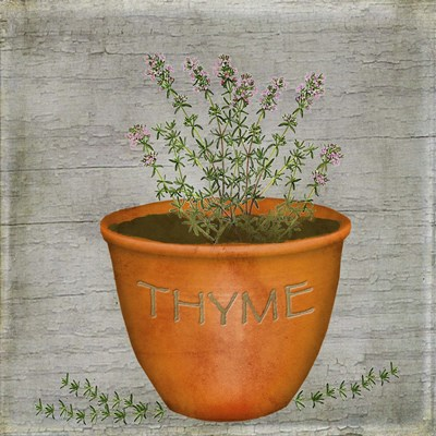 Herb Thyme art print by Beth Albert for $35.00 CAD