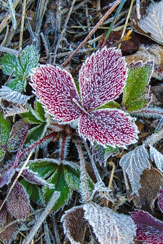 First Frost art print by Brenda Petrella Photography LLC for $35.00 CAD