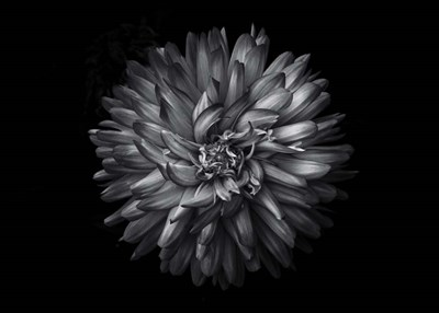 Backyard Flowers In Black And White 20 art print by Brian Carson for $52.50 CAD