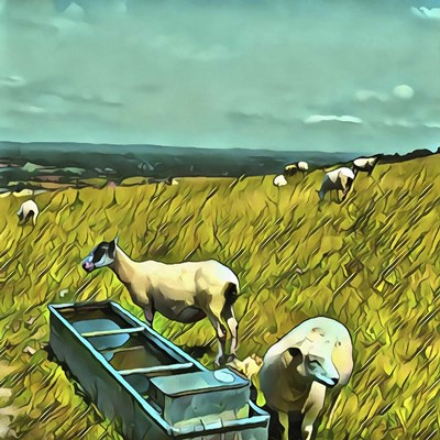 Sheep at Water Trough art print by Dorothy Berry-Lound for $56.25 CAD