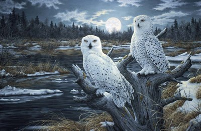 Snowy Owls art print by Jeff Tift for $61.25 CAD