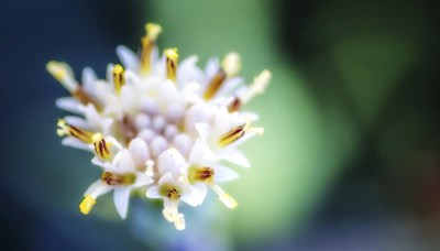 Macro Flower Head art print by Pixie Pics for $40.00 CAD