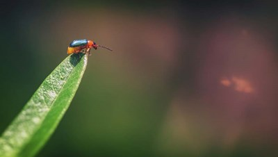 Red And Green Bug art print by Pixie Pics for $40.00 CAD