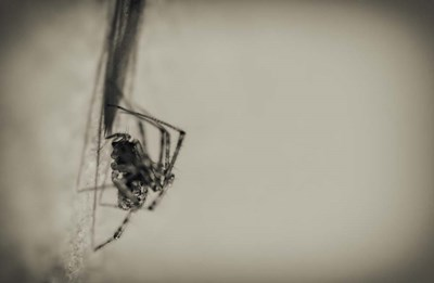 Spider 1 art print by Pixie Pics for $43.75 CAD