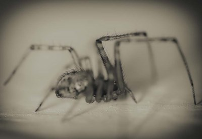 Spider 2 art print by Pixie Pics for $45.00 CAD