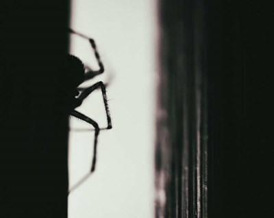 Spider 3 art print by Pixie Pics for $48.75 CAD