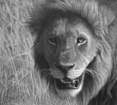 Lion In The Massai Mara art print by Stephen Ainsworth for $46.25 CAD