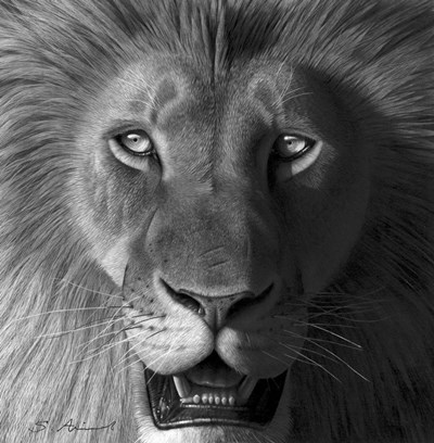 Lion In The Morning Light art print by Stephen Ainsworth for $50.00 CAD