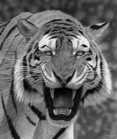 Tiger Growling art print by Stephen Ainsworth for $53.75 CAD