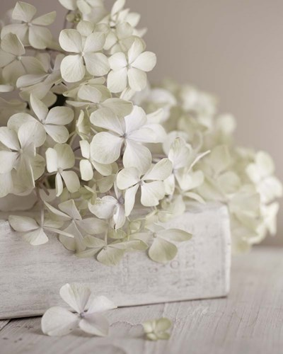 White Flowers art print by Symposium Design for $56.25 CAD