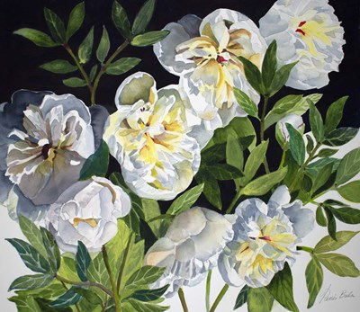 White Peonies art print by Tanis Bula for $45.00 CAD
