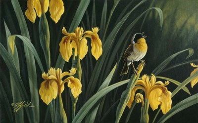 Yellow Flags & Yellowthroat art print by Wilhelm J. Goebel for $60.00 CAD