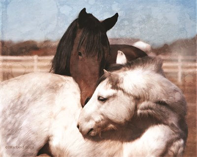 White and Chestnut Horses art print by Bluebird Barn for $56.25 CAD