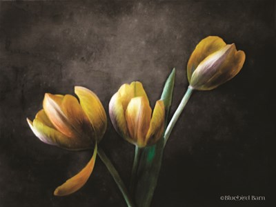 Contemporary Floral Tulips art print by Bluebird Barn for $67.50 CAD