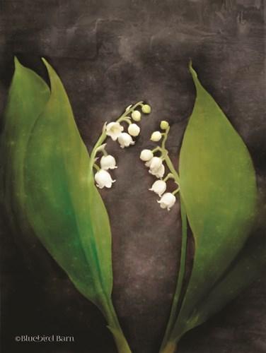 Contemporary Floral Lily of the Valley art print by Bluebird Barn for $67.50 CAD