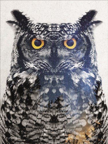 Night Owl art print by Andreas Lie for $41.25 CAD
