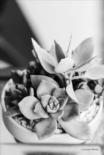 Succulents art print by Melissa Hanley for $43.75 CAD