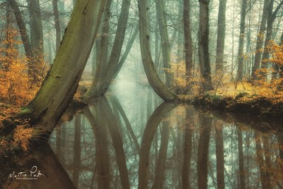 Lust for Life art print by Martin Podt for $43.75 CAD