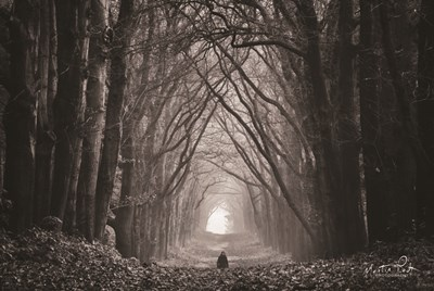 In the Land of Gods and Monsters art print by Martin Podt for $43.75 CAD