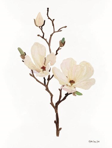 Magnolia art print by Stellar Design Studio for $53.75 CAD