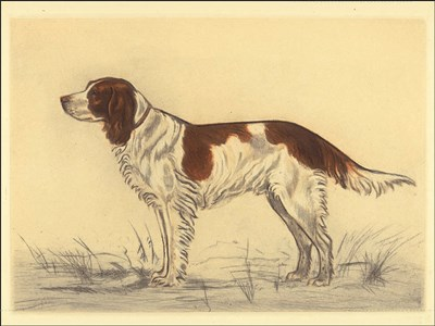 Hunting Dogs-Spaniel art print by Andres Collot for $41.25 CAD
