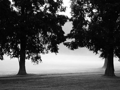 Fog in the Park II art print by Gary Bydlo for $67.50 CAD