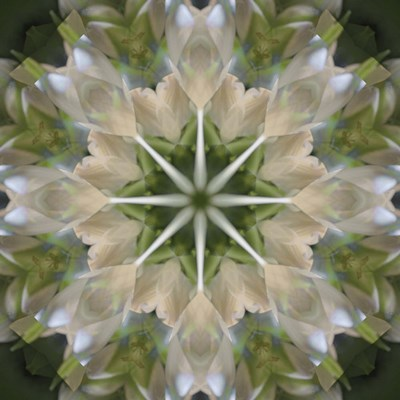 Colorful Kaleidoscope 5 art print by Anna Miller / Danita Delimont for $53.75 CAD
