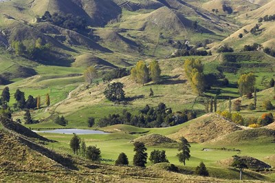 Farmland near Bells Junction, Rangitikei District, Central North Island, New Zealand art print by David Wall / Danita Delimont for $91.25 CAD