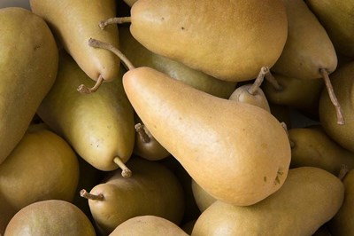 Canada, British Columbia, Cowichan Valley Close-Up Of Harvested Pears art print by Kevin Oke / DanitaDelimont for $68.75 CAD