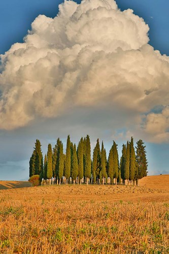 Italy, Tuscany Cypress Tree Grove And Towering Cloud Formation art print by Jaynes Gallery / Danita Delimont for $42.50 CAD