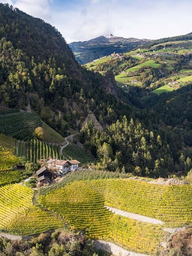 Viniculture Near Klausen In South Tyrol During Autumn, Italy art print by Martin Zwick / Danita Delimont for $72.50 CAD
