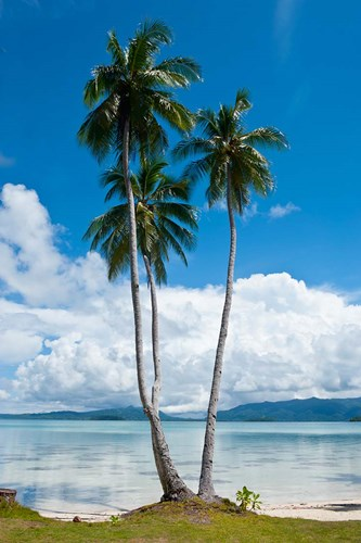 Lonely Palm Tree In The Marovo Lagoon, Solomon Islands art print by Michael Runkel / DanitaDelimont for $42.50 CAD