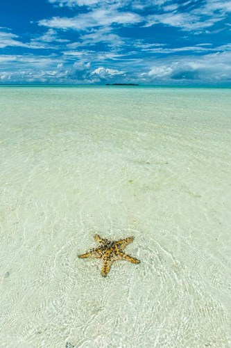 Sea Star In The Sand On The Rock Islands, Palau art print by Michael Runkel / DanitaDelimont for $42.50 CAD