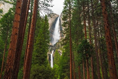 Yosemite Falls Through A Forest art print by Russ Bishop / DanitaDelimont for $53.75 CAD