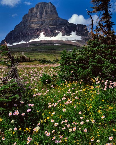 Clements Mountain, Glacier National Park, Montana art print by Jaynes Gallery / Danita Delimont for $70.00 CAD