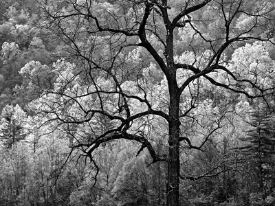 Tree Caught In Dawn's Early Light, North Carolina (BW) art print by Ann Collins / DanitaDelimont for $55.00 CAD