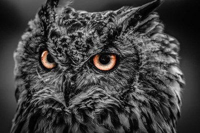Wise Owl 5 Black & White art print by Duncan for $43.75 CAD