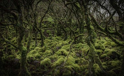 Mossy Forest art print by Duncan for $41.25 CAD
