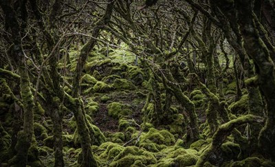 Mossy Forest 2 art print by Duncan for $41.25 CAD