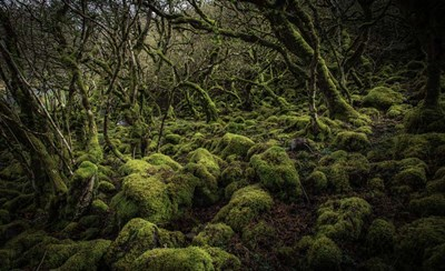 Mossy Forest 4 art print by Duncan for $41.25 CAD