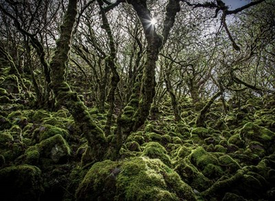Mossy Forest 6 art print by Duncan for $46.25 CAD