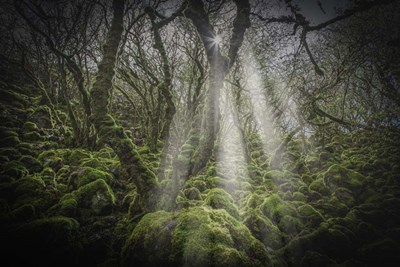 Mossy Forest 5 art print by Duncan for $43.75 CAD