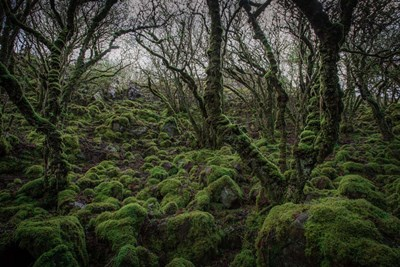 Mossy Forest 7 art print by Duncan for $43.75 CAD